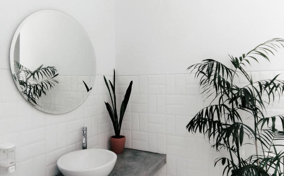 zieleń w łazience