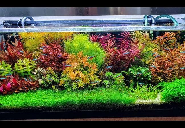 jakie oświetlenie akwarium roślinnego